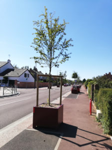 arbres en pot à combs la ville